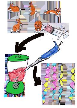 Genetic diversity in biology | Evolution Biology